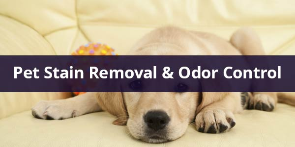 pet stain removal and odor control